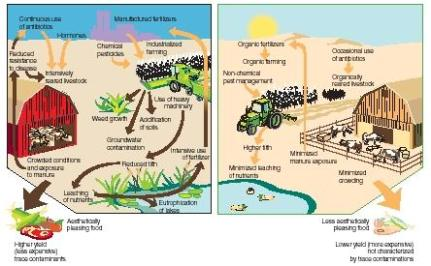 CONVENTIONAL VS. ORGANIC FARMING